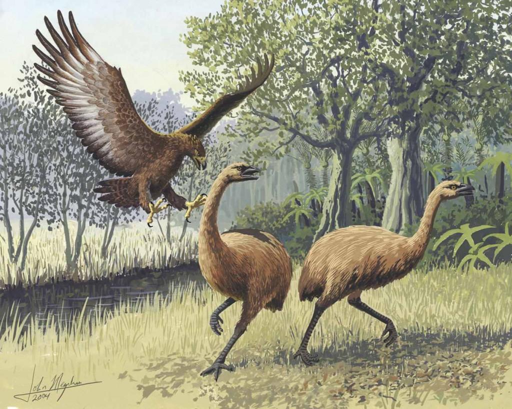 I Moa attaccati dall'aquila, unico loro predatore prima dell'apparizione dell'uomo in Nuova Zelanda