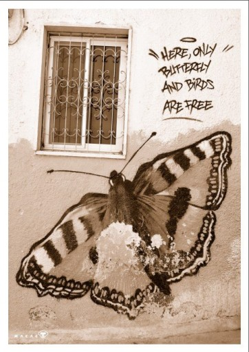 """Qui solo le farfalle e gli uccelli sono liberi - Palestina oggi. Foto di Daniele """"Macaco""""."""