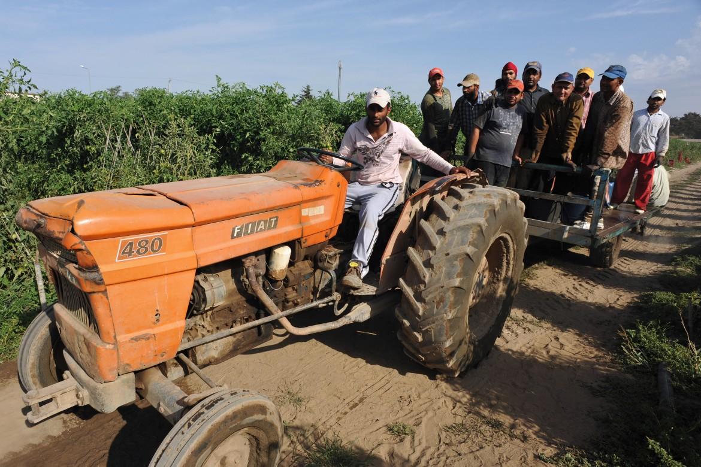 Indiani sikh al lavoro nei campi dell'agro pontino