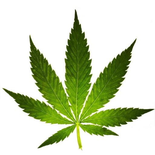cannabis-leaf-80682