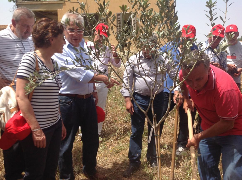 I sindacalisti della Flai Cgil, guidati dalla segretaria Stefania Crogi (a sinistra), piantano un ulivo a Borgo Borzellino (Palermo)