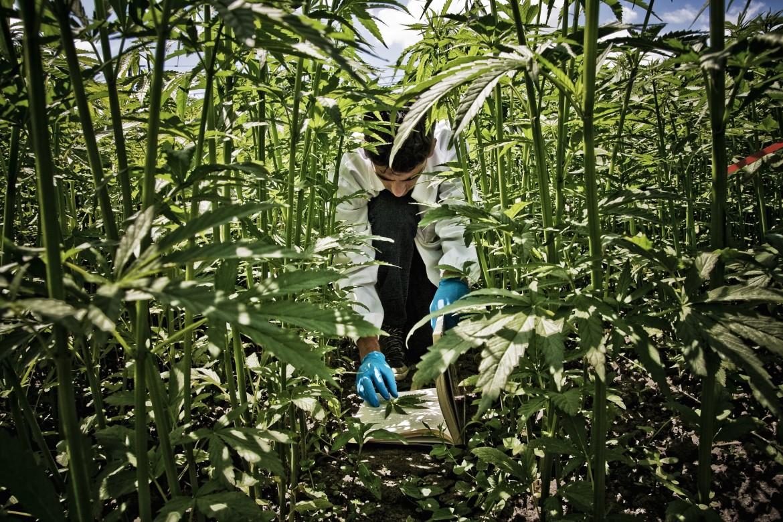 Un agronomo ispeziona le piante del centro Cra-Cin di Rovigo