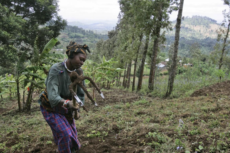 Arusha (Tanzania), contadina al lavoro