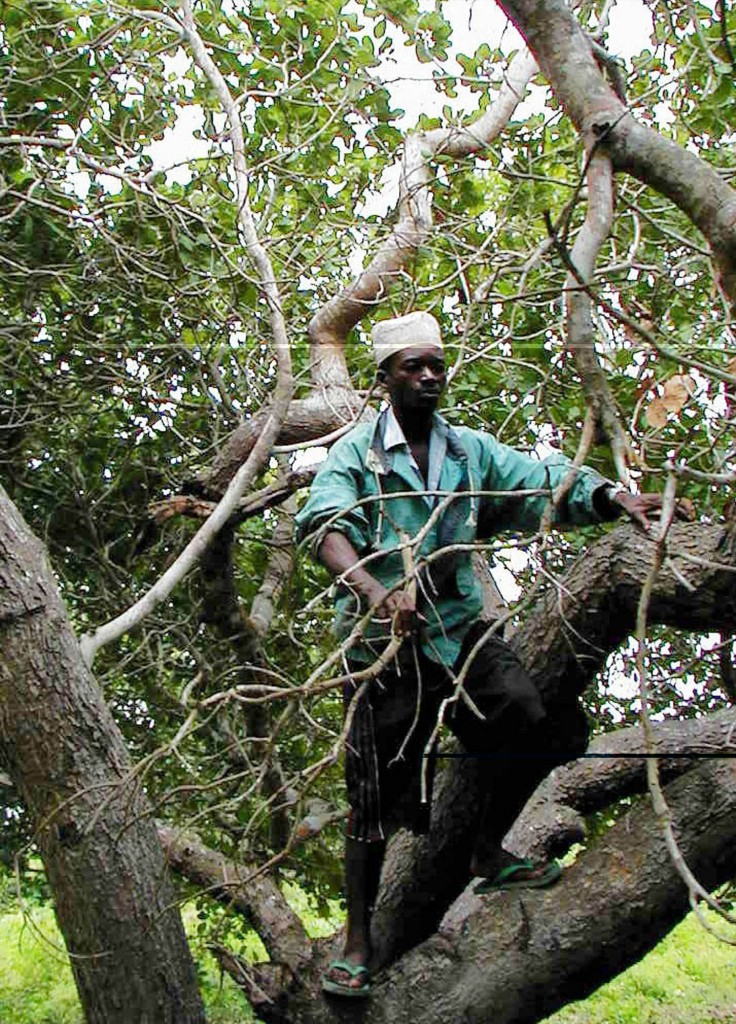 Un piccolo coltivatore a Kibaha, 40 km a ovest di Dar es Salaam
