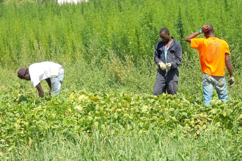 I contadini richiedenti asilo del progetto Maramao, a Canelli (Asti)