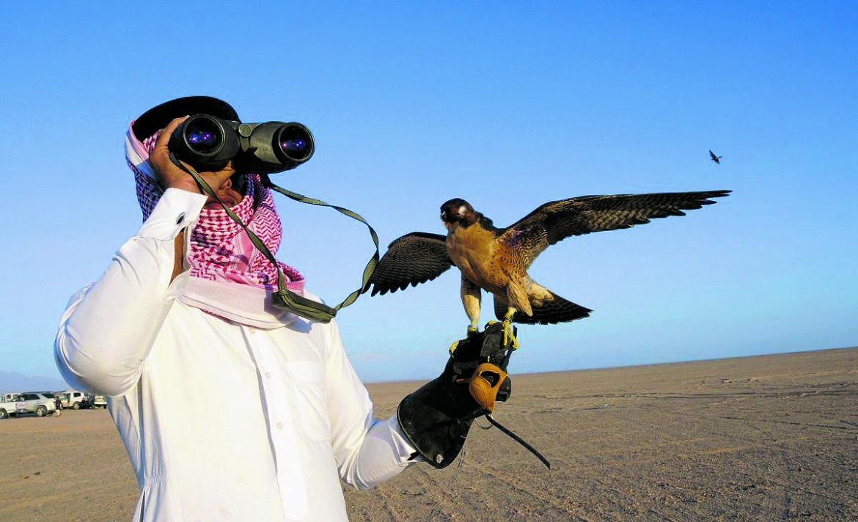 A caccia di ubara col falcone