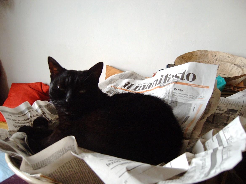 Il gatto Miranda di una lettrice