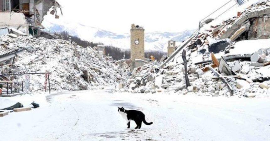 Un gatto sperduto nella neve tra le macerie di Amatrice