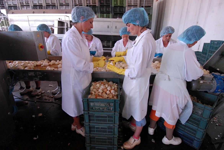 Un gruppo di operaie prepara semilavorati in un'azienda agroalimentare