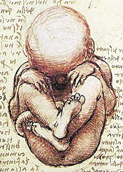Leonardo da Vinci, il feto