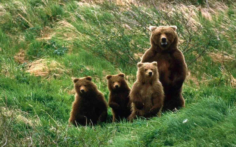 Una famiglia di orsi nel Parco nazionale d'Abruzzo