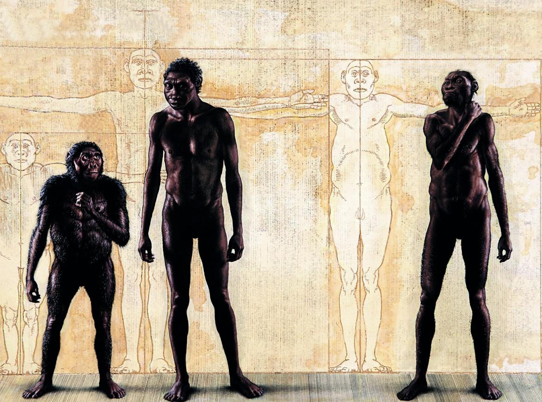 Lucy, Homo erectus, Homo naledi