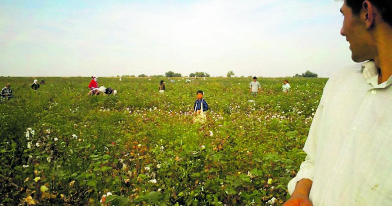 Lavoratori nei campi di cotone dell'Uzbekistan
