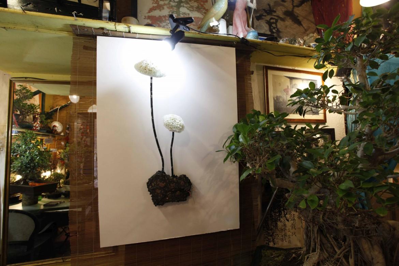 Kristof Kintera, installazione presso Albero Antico Bonsai