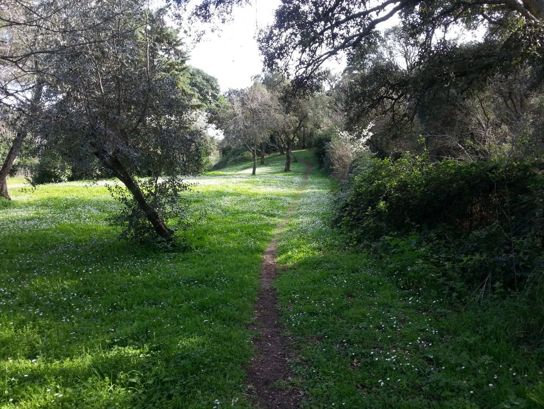 Il bosco delle sugherete a Pomezia
