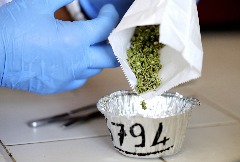 Cannabis ad uso terapeutico prodotta da un'azienda agricola di Rovigo