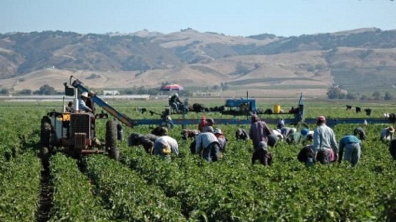 Il lavoro nei campi, Piana Del Sele