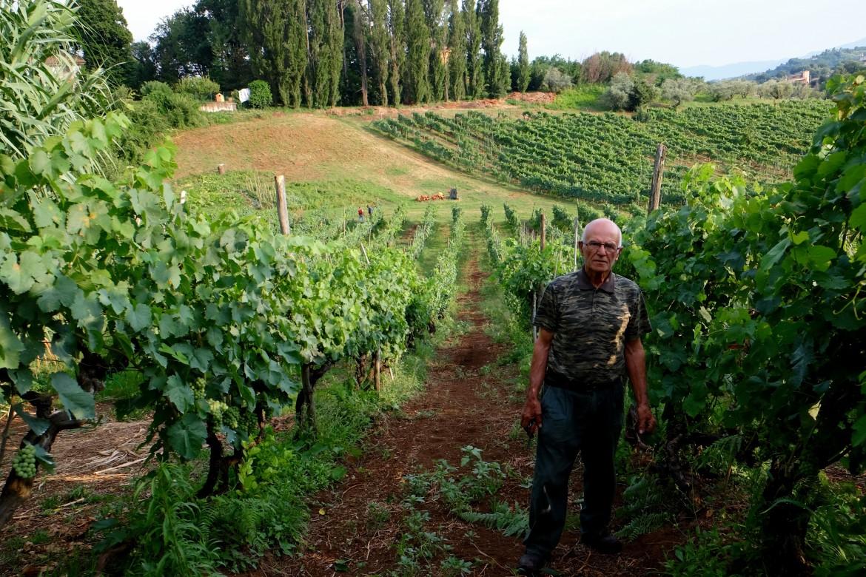 Un vitigno di Cesanese del Piglio