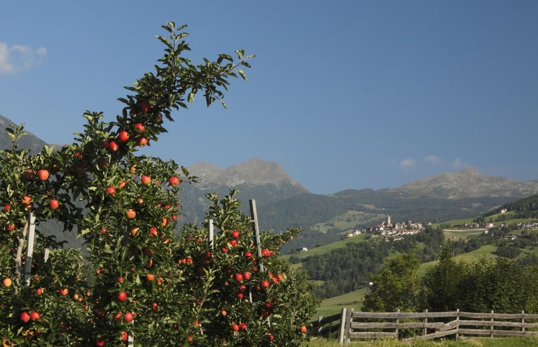 Meleti in Alto Adige