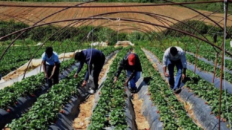 Braccianti stranieri in Campania: le Asl faranno i controlli ma il ...