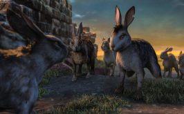 Sulla collina dei conigli il senso misterioso della vita in comune