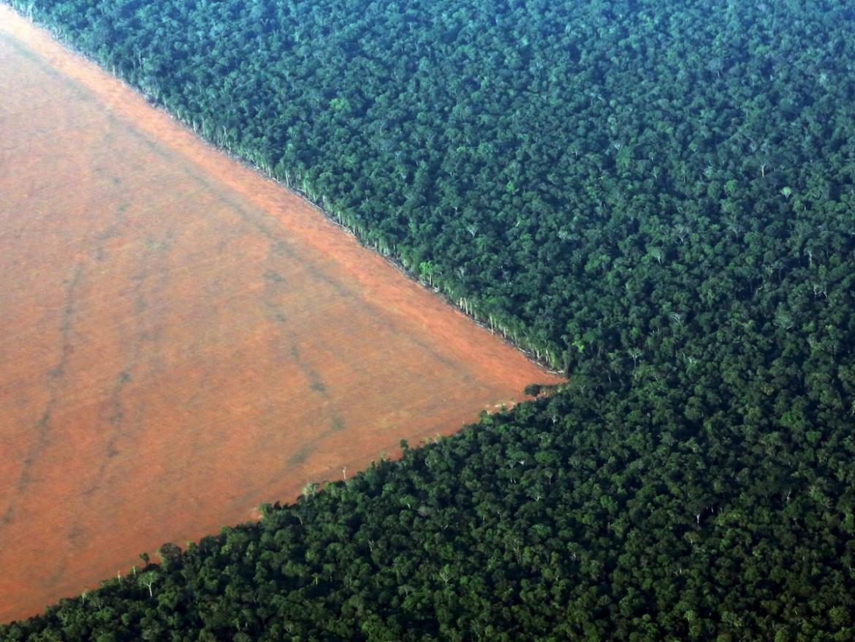 Il rettangolone deforestato, visibile dal satellite, di oltre mille chilometri quadrati nell'Amazzonia brasiliana dall'inizio dell'era Bolsonaro