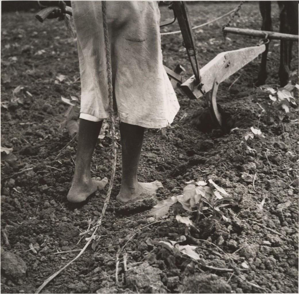Dorothea Lange, Alabama Plow Girl, near Eutaw, Alabama,1936 , New York, The Metropolitan Museum of Art