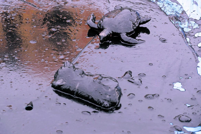 Una delle immagini simbolo della marea nera che ha investito le coste del nordest brasiliano