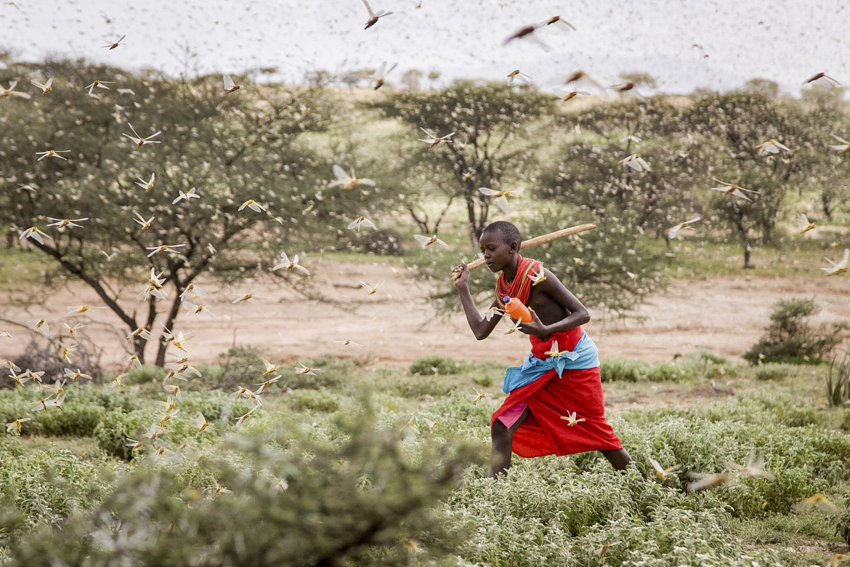 Kenya, invasione cavallette