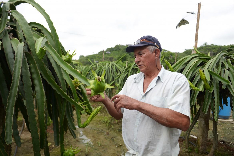 Un frutteto in Ecuador
