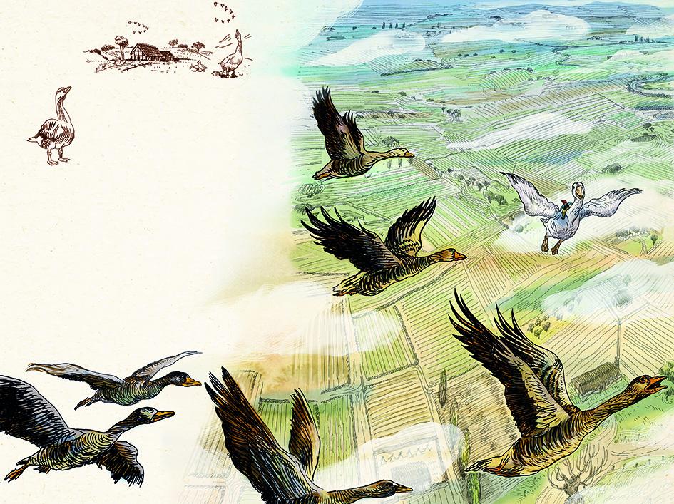Illustrazione di Marco Paci