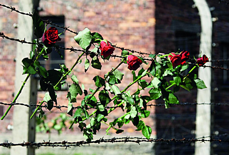 Rose sul filo spinato del campo di sterminio, 2009, nel giorno della marcia annuale da Auschwitz a Birkenau