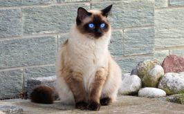 Il povero gatto non centra con le molestie di strada