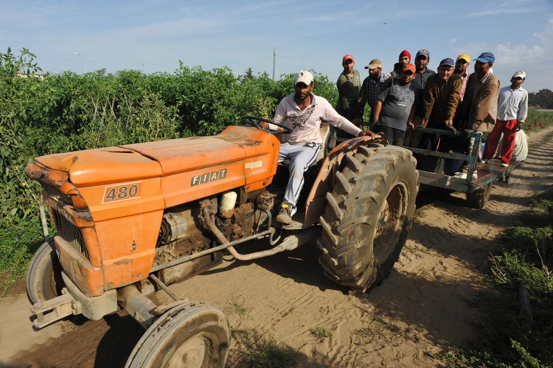 Migranti di origine sikh impiegati nell'agricoltura