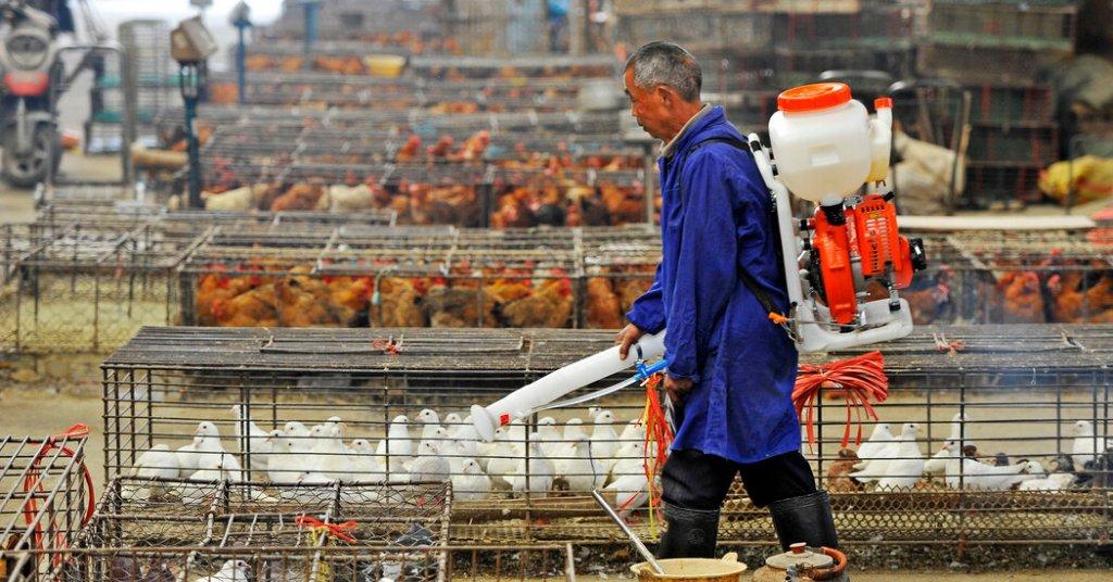 Allevamento di pollame in Cina