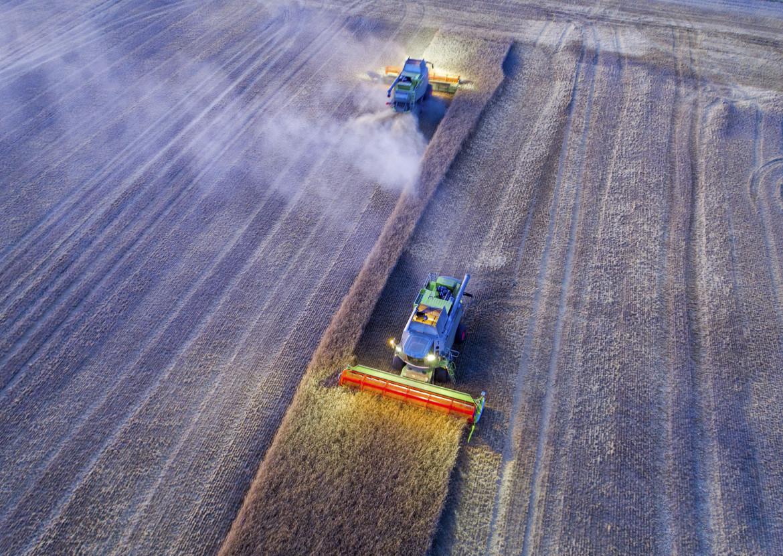 Campi di grano in Germania