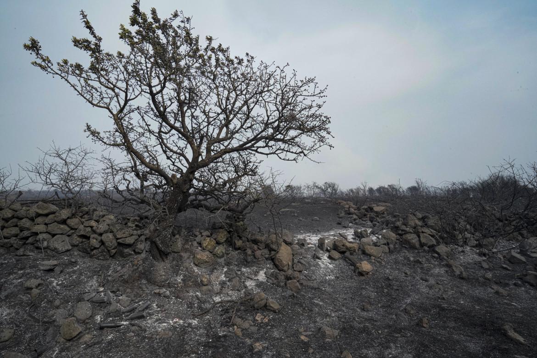 Alberi inceneriti in Sardegna