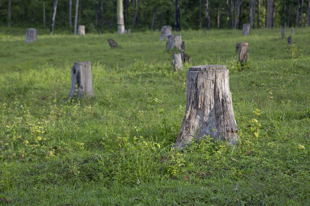 Alberi abbattuti a Chaung Gwet, ex foresta decimata dal disboscamento