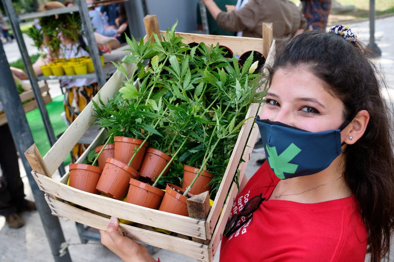 «Cannabis meglio legale», l'iniziativa in Piazza Vittorio a Roma