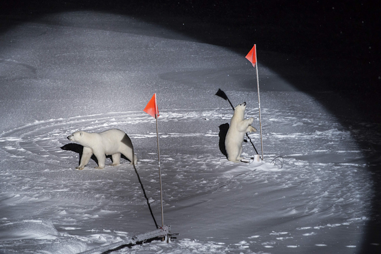 Un orso polare e il suo cucciolo si avvicinano alle apparecchiature posizionate dagli scienziati della Polarstern nell'oceano Artico centrale, 2019